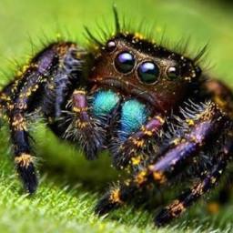 spookyspiders freetoedit