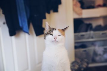 freetoedit cat interesting catlover catsofpicsart