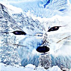 freetoedit winter whitefox white fox