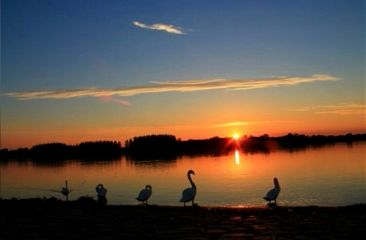 freetoedit sunset swans travel landscape