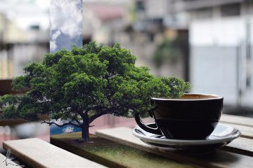 nature tree coffee table wooden freetoedit