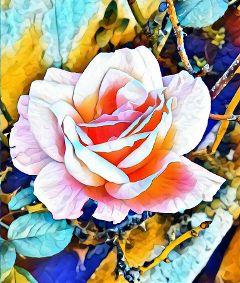 flowers rose rosa flor freetoedit