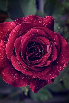 cute emotions flower freetoedit happy
