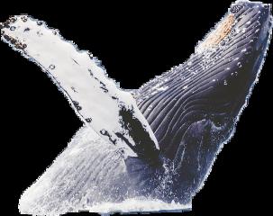 balina freetoedit whaleremix