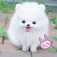 dogsofpicsart