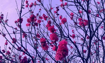 spring nature blossom photography
