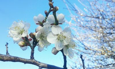 nature photography blossom