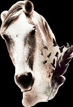 horses freetoedit