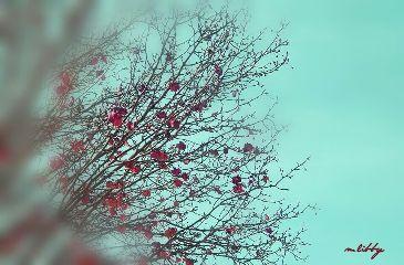waptiltshifteffect autumndays tree autumnleaves hazyshadeofblue