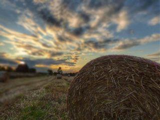 waptiltshifteffect nature photography summer hay