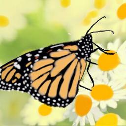 wdpbutterflies mariposa butterfly