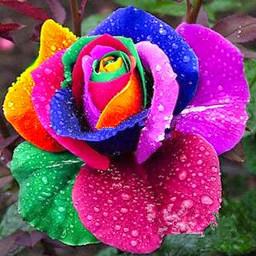 colorfulbackground freetoedit flower