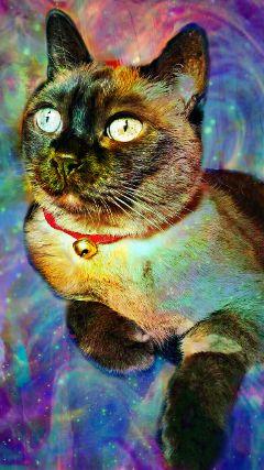 freetoedit galaxyedit galaxy cat colorfulgalaxy