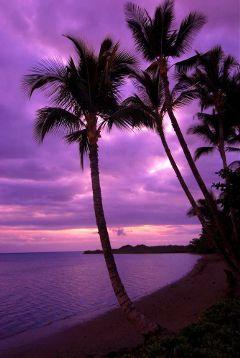 freetoedit beauty travel island palmtree