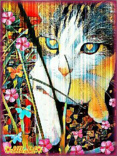 freetoedit sweetkitty catlove inspiration photoart