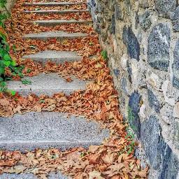 freetoedit autumn leavesfall ladder myphoto