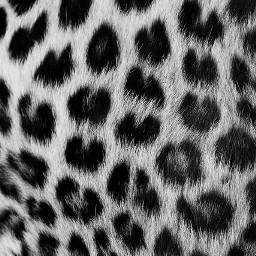 freetoedit beyoncebackgrounds backgrounds leopardprint
