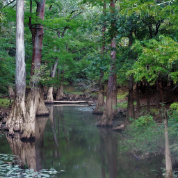 freetoedit outdoors river nature trees