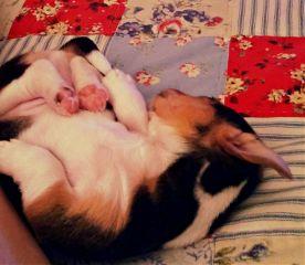 puppy petsandanimals photography sleeping adogslife