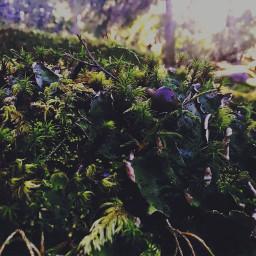 plant forest vegetation sun freetoedit