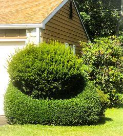 bushes landscape trendy beautyinnature natureportrait