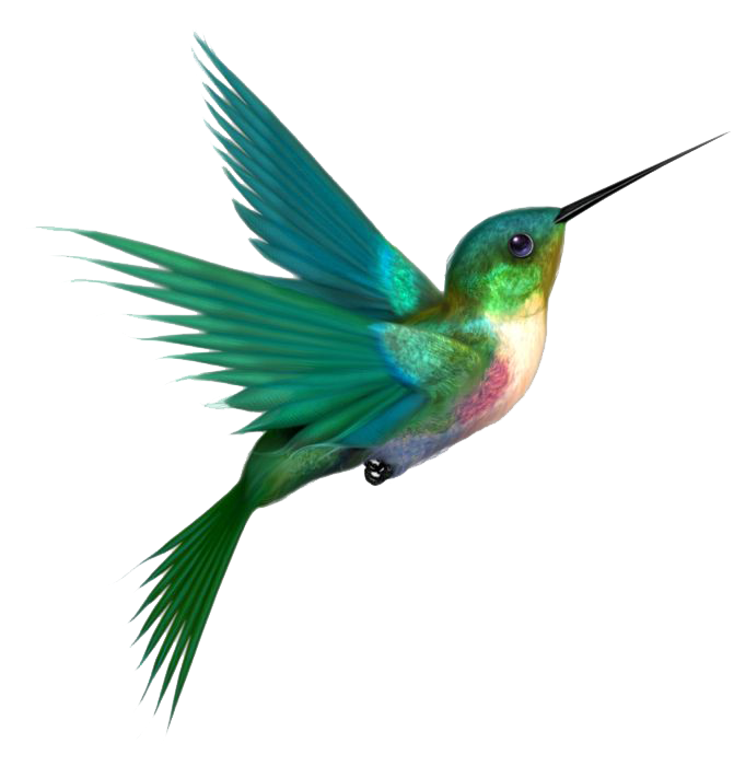 #ftestickers #hummingbird #bird