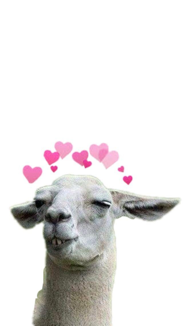 Freetoedit Llama Hearts Wallpaper Iphone