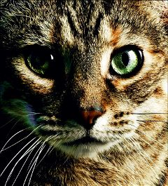 catlove cats