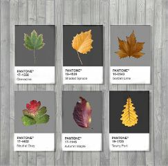 freetoedit pantone autumnleaves collection colorsplash