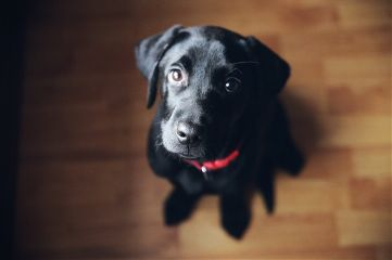 freetoedit dog dogsofpicsart doglover love
