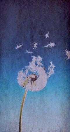 interesting dandelion dreams paper bluesky