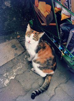 freetoedit kedi catsofistanbul catsofpicsart kitty