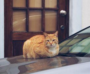 walkingaround beautifulstreetcat car petsandanimals catsofpicsart