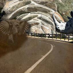 madewith rhino elephant stampede myphotography