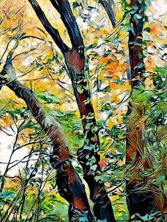 freetoedit autumnbeauty treesintransition mondayafternoon bensalempa