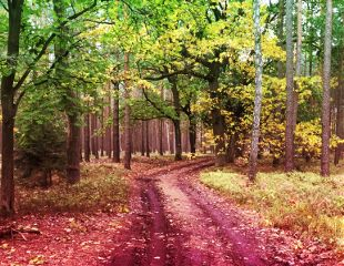 freetoedit trees tree treeoflife wapcolorgradient