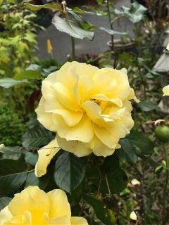 my friend garden seattle home