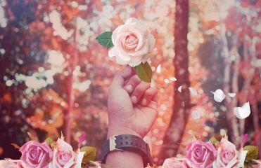 freetoedit flower petals pretty imagination
