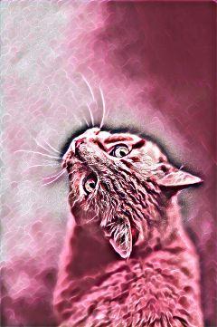 freetoedit cats prettyinpinkmagiceffect remixedbyme