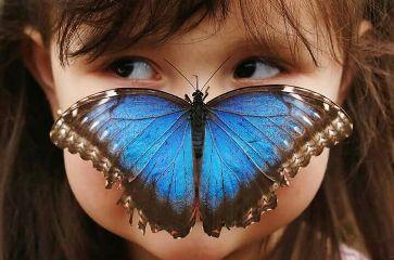 freetoedit girl boy butterfly funny