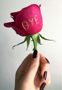 freetoedit flower bye gift