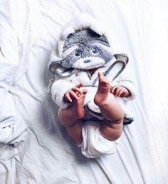 freetoedit baby rabbit