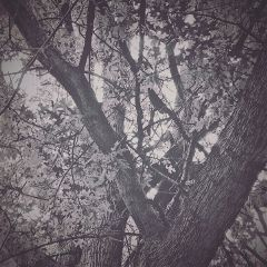 monochrome black back lush treetrunk