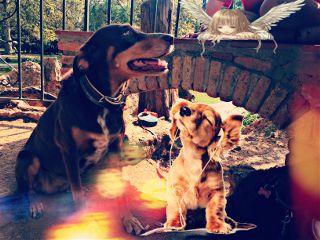 puppystickerremix freetoedit