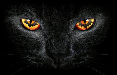 freetoedit blackcat eye halloween hdr
