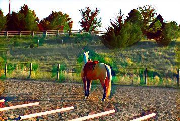 freetoedit horse flare myphoto