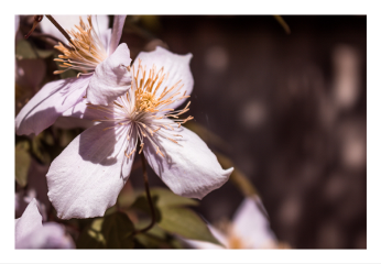 nature naturephotography landscape flower blossom