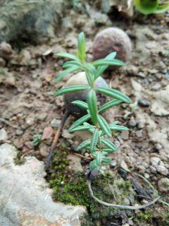 freetoedit remixit small green tree