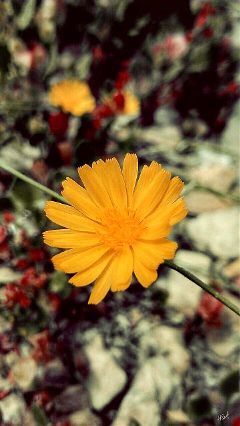 flower colorsplash photography