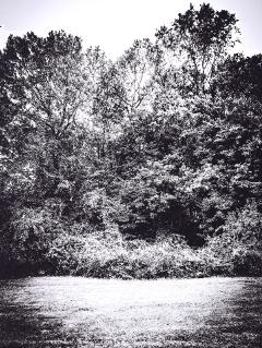 monochrome black natureportrait landscapeportrait woodland